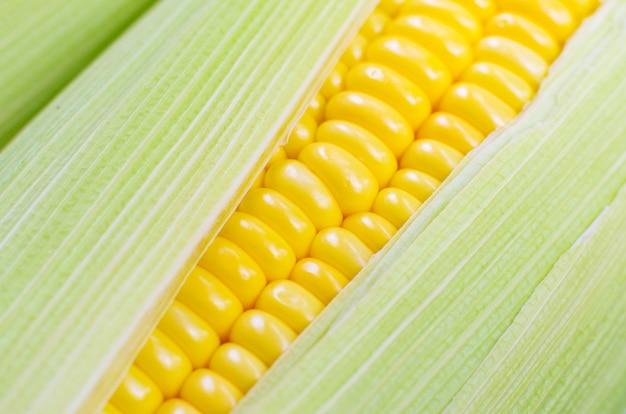 Zbliżenie świeżej kukurydzy, ekologicznej koncepcji warzyw i żywności