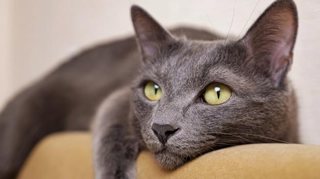 Zbliżenie szarego kota, który kłamie i zamyka oczy