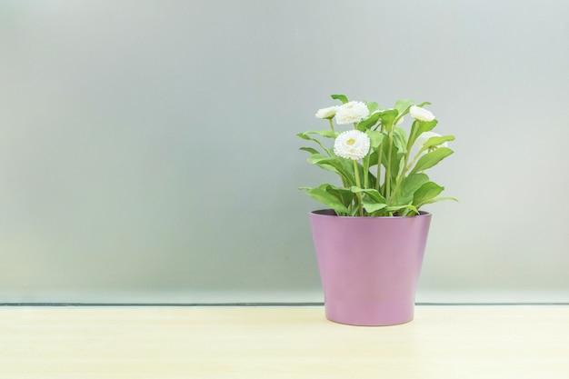 Zbliżenie sztuczna roślina z białym kwiatem na purpurze puszkuje na zamazanym drewnianym biurku