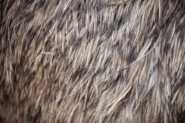 Zbliżenie tekstura piór emu.