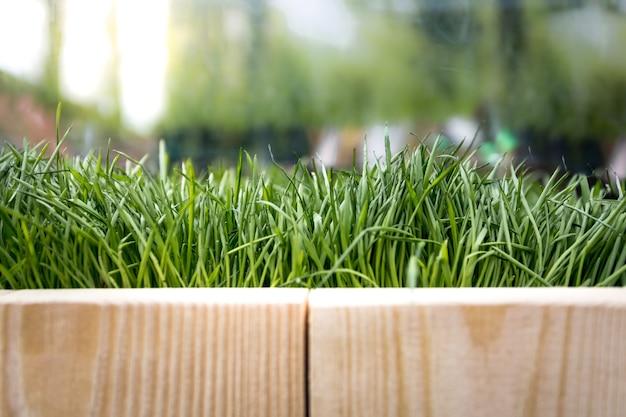 Zbliżenie tekstury desek i świeżej zielonej trawy w słoneczny dzień