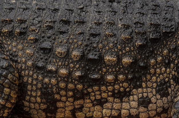 Zbliżenie tekstury skóry krokodyla