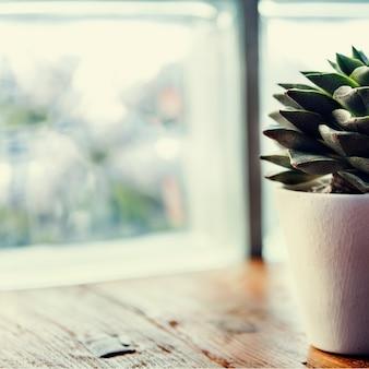 Zbliżenie tłustoszowaty kaktus w białym garnku na drewnianym stole okno