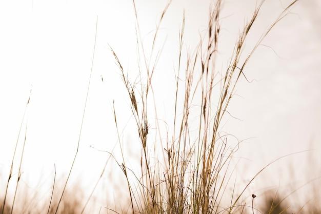 Zbliżenie trawy