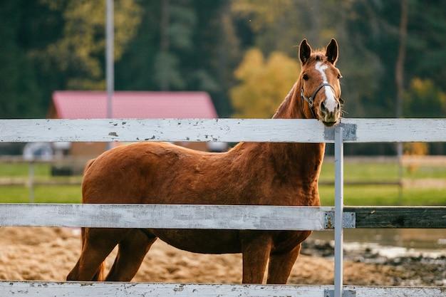 Zbliżenie trybowy śmieszny portret koń przy paśnikiem plenerowym przy naturą. piękny kaganiec koni. rolnictwo i hodowla w lecie.