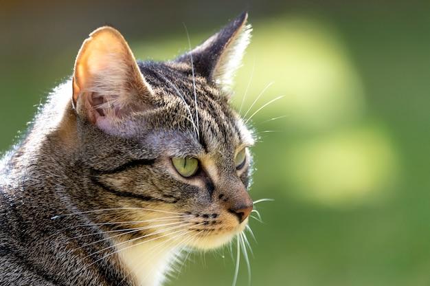 Zbliżenie uroczego pasiastego kota na zewnątrz w świetle słonecznym