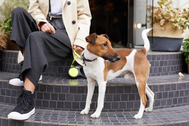 Zbliżenie uroczego psa jack russell terrier stoi w pobliżu swojego właściciela, czuje się szczęśliwy