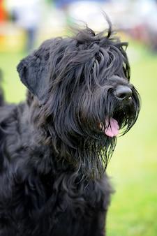 Zbliżenie uroczego psa w letniej zielonej trawie