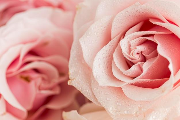 Zbliżenie walentynki; koncepcja dnia s z różami