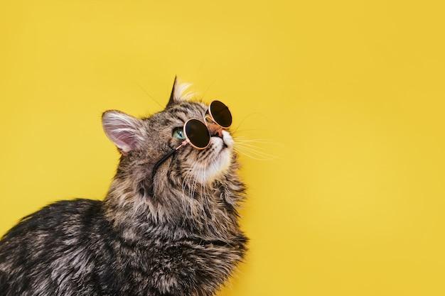 Zbliżenie widok niesamowitego domowego zwierzaka w czarnych okrągłych okularach przeciwsłonecznych mody jest izolowany na żółtej ścianie