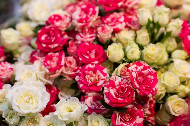 Zbliżenie widok świeżych kolorowych róż