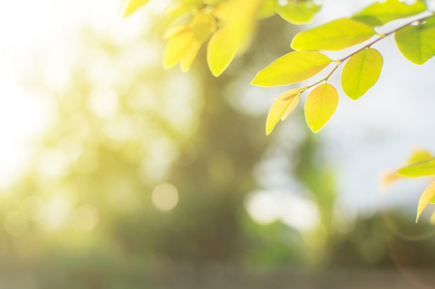 Zbliżenie widoku liście są zieleni z tłem zamazującym. kółko-kształtna bokeh natura i su