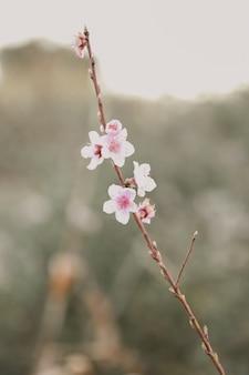 Zbliżenie wiśni w słońcu w ogrodzie