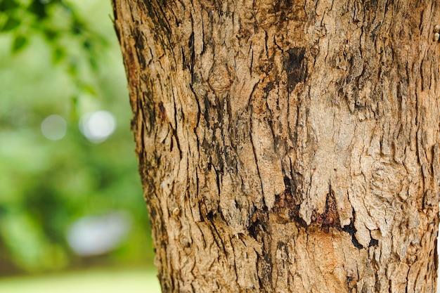 Zbliżenie wzoru pęknięć na pniach drzew z tłem przyrody w parku.