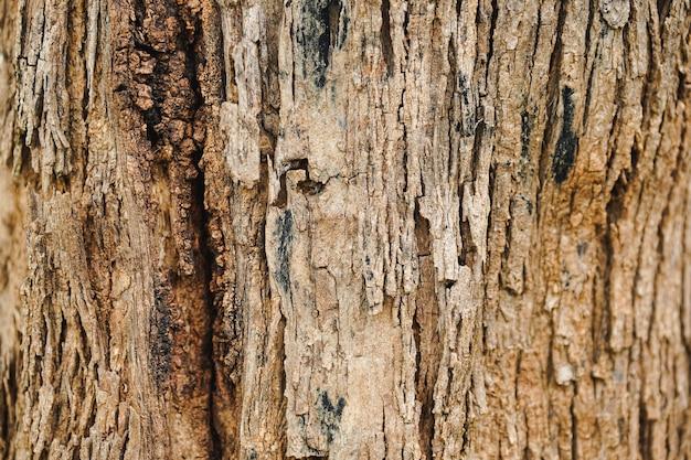Zbliżenie wzoru pęknięć na pniach drzew.