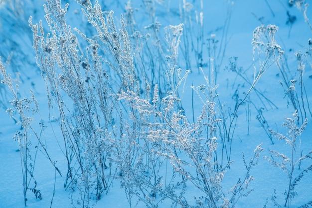 Zbliżenie zamarzniętej trawy. szron na roślinach. zimowy krajobraz: śnieg na przyrodzie. tło mgły, dzikie kwiaty i sucha trawa pokryta śniegiem