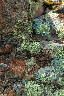 Zbliżenie zdjęcie mchu i porostów rosnących na kamieniu w górach