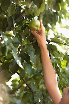 Zbliżenie zdjęcie młodej dziewczyny osiągającej rosnące wysokie jabłko