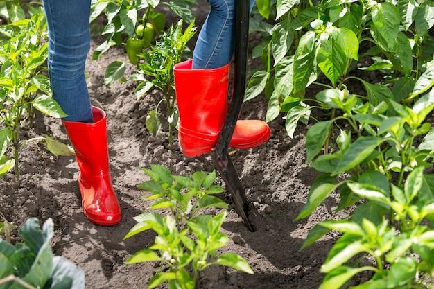 Zbliżenie zdjęcie osoby w czerwonych kaloszach, kopiącej ziemię w ogrodzie