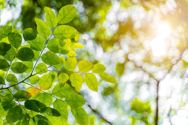 Zbliżenie zieleni liście z światłem słonecznym w forrest. świeże naturalne tło.