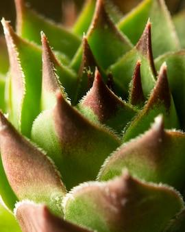 Zbliżenie: zielona soczysta roślina