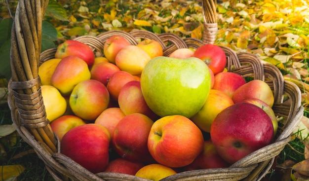 Zbliżenie zielone jabłko leżące na czerwonych jabłkach w wiklinowym koszu