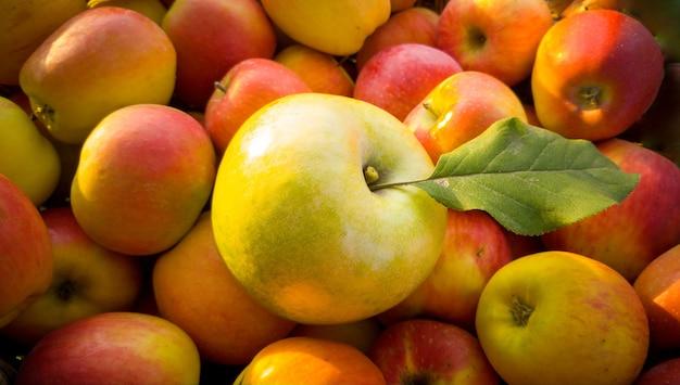 Zbliżenie zielone jabłko z liściem leżącym na czerwonych jabłkach