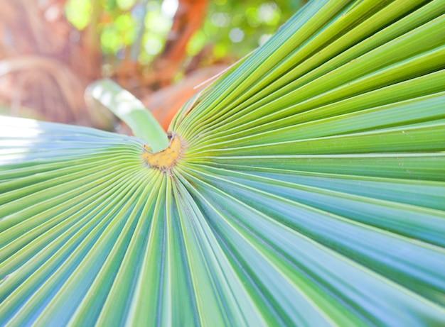 Zbliżenie zielonego liścia palmowego