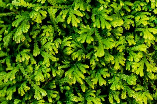 Zbliżenie zielonego liścia z teksturą tła