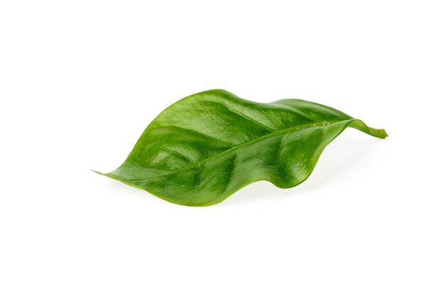 Zbliżenie: zielony liść na białym tle