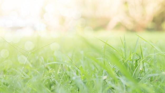 Zbliżenie zielony liść na zamazanym tle w ogródzie