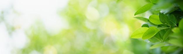 Zbliżenie zielony liść natura na niewyraźne tło zieleni w ogrodzie z bokeh i kopia przestrzeń, używając jako koncepcji strony tytułowej tła.