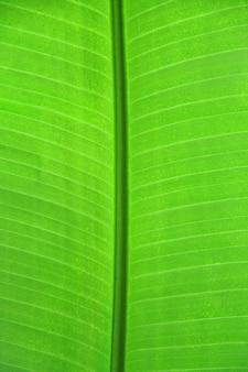 Zbliżenie zielony liść