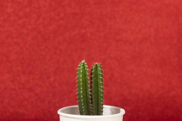 Zbliżenie zielony mały kaktus roślin na czerwonym tle koloru