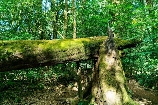 Zbliżenie zielony mech na drzewie w lesie