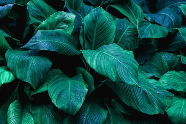 Zbliżenie zielonych liści natura tło