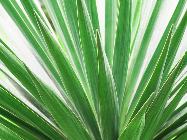 Zbliżenie zielonych liści palmowych. tropikalne naturalne tło