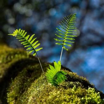 Zbliżenie zielonych liści rosnących na omszałej powierzchni
