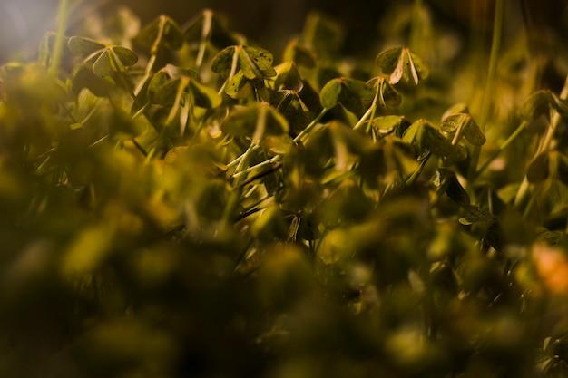 Zbliżenie zielonych liści