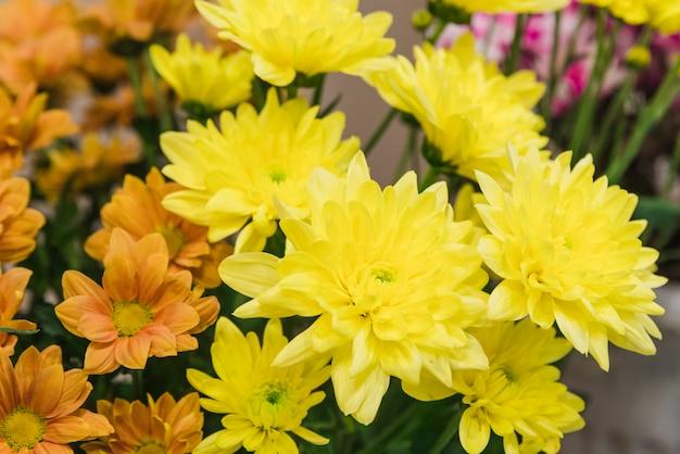 Zbliżenie żółte kwiaty chryzantem