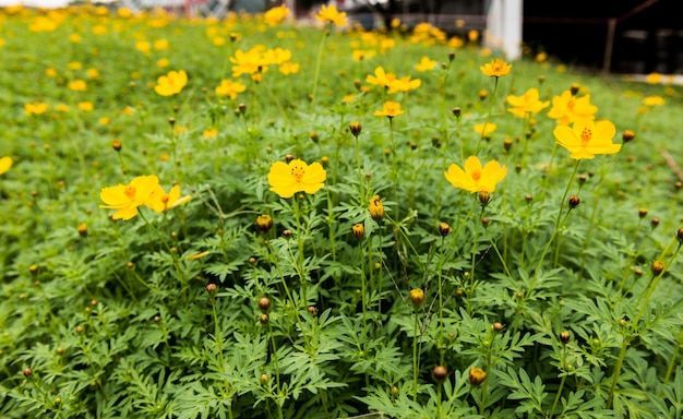 Zbliżenie żółte kwiaty