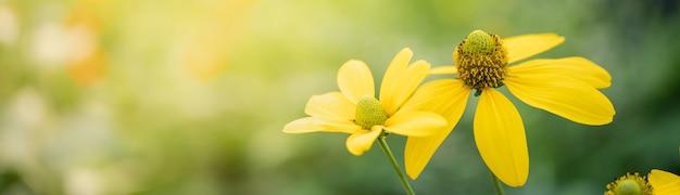Zbliżenie żółty kwiat na niewyraźne tło gereen w świetle słonecznym z bokeh i przestrzeni kopii, używając jako tła krajobrazu roślin naturalnych, koncepcja strony tytułowej ekologii.