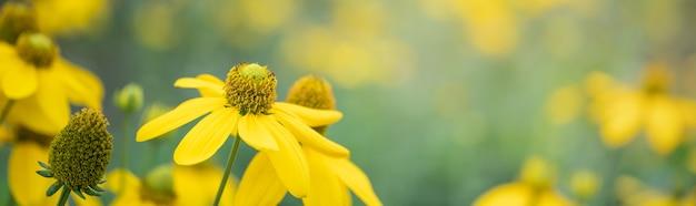 Zbliżenie żółty kwiat na tle niewyraźne natura w świetle słonecznym z miejsca kopiowania, używając jako tła naturalnego krajobrazu flory