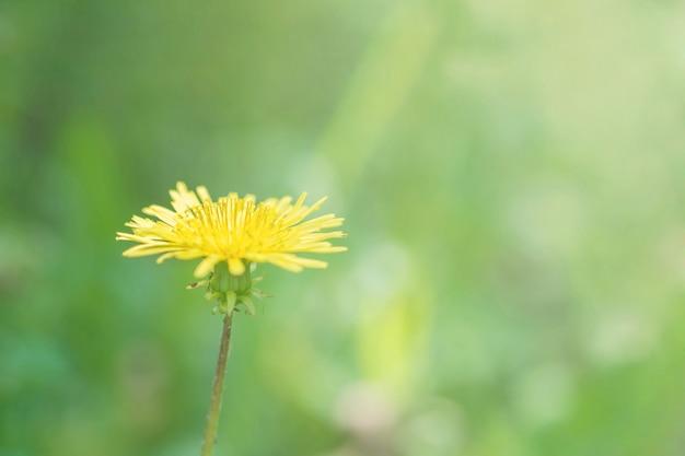 Zbliżenie żółty kwiat w ogrodowym textured tle z kopii przestrzenią