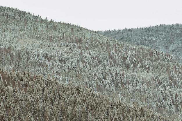 Zbocza gór z gęstym, ośnieżonym lasem iglastym. zimowy krajobraz