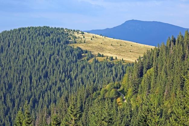 Zbocze góry lasu. karpaty. ukraina