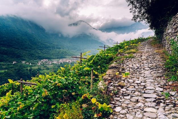Zbocze góry z winnicami w pochmurny dzień we włoskich alpach.