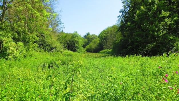 Zbocze wzgórza porośnięte trawami i drzewami w słoneczny dzień