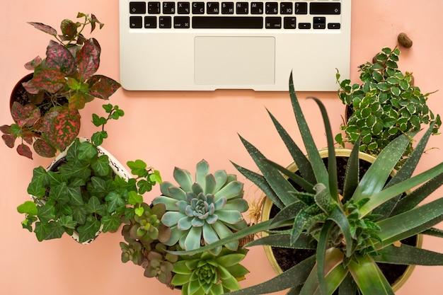 Zdalne zakupy online roślin i sprzętu ogrodniczego. wygodne, stylowe miejsce pracy freelancera z laptopem i sukulentami roślin domowych.