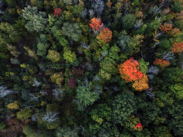 Zdjęcia lotnicze kolorowego jesiennego lasu